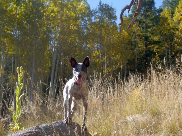 2015_1011_WeatherfordTrail_24_blog